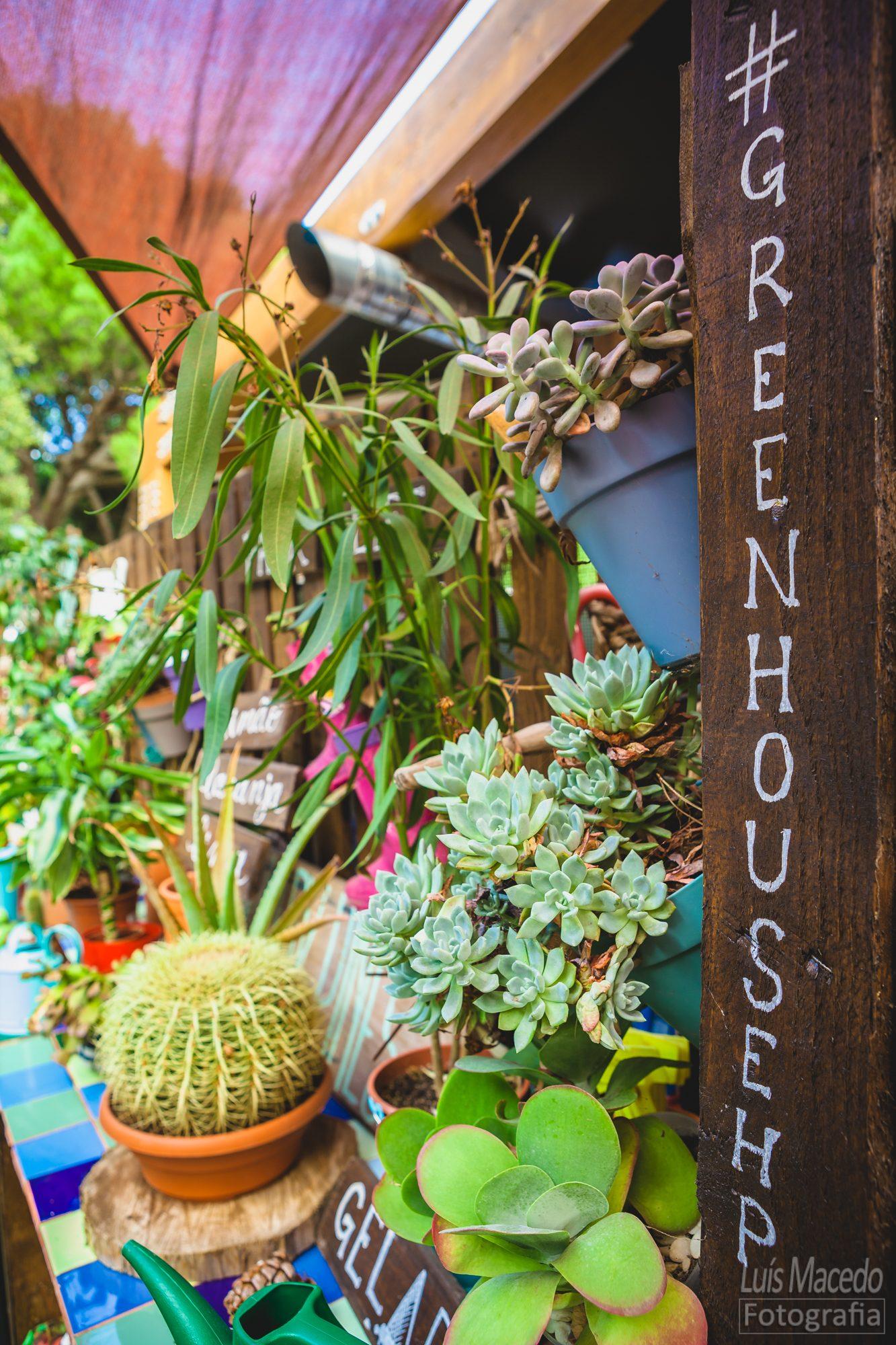 taina musica apresentação disco cantautora showcase greenhouse